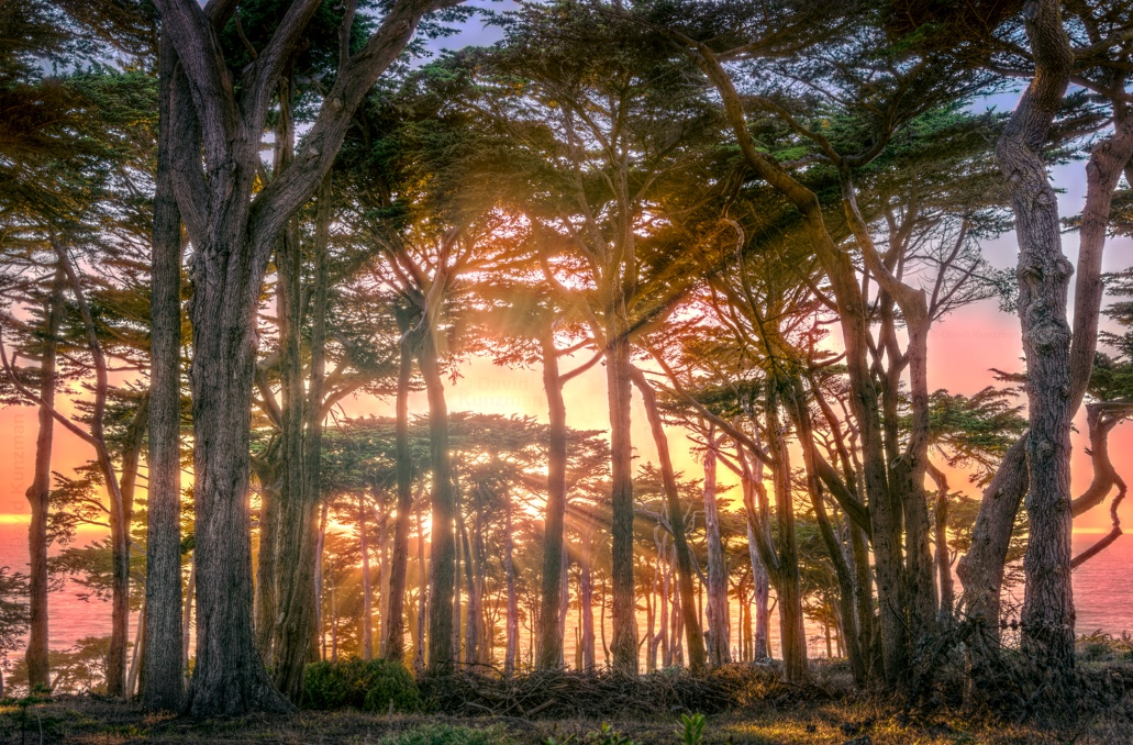 A photograph of the sun setting behind trees at Lands End Park in San Francisco, CA.  The Pacific Ocean can be seen in the background.